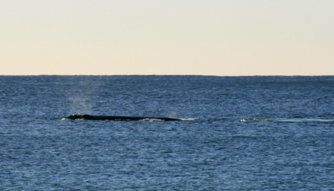 1208-whales3